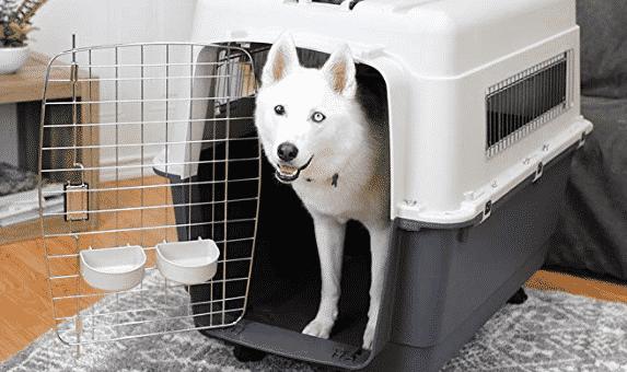 12 Best Large Dog Kennels for Your Big Dog