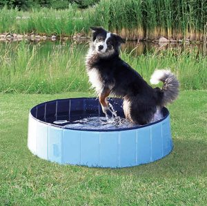 dog playing in blue Trixie pool