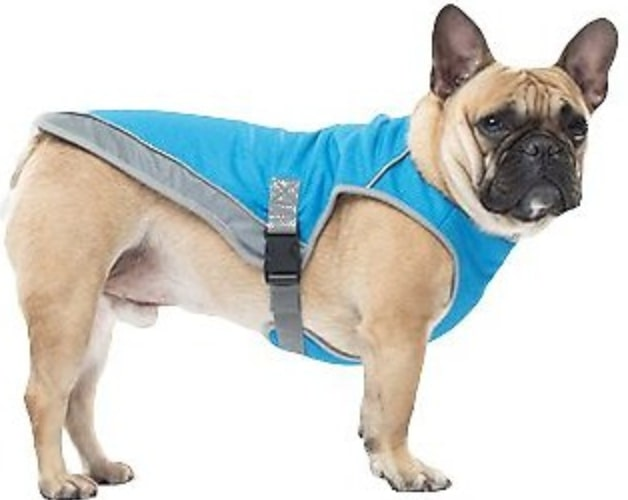 dog in Canada Pooch aqua-colored cooling vest