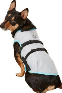 dog wearing Suitical dry cooling vest