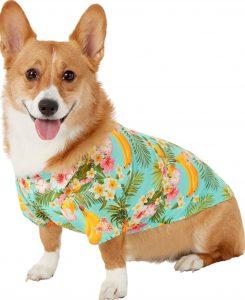 Chewy Frisco Hawaiian shirt summer dog top