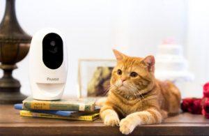 Pawbo+ Wi-Fi Interactive pet camera with orange cat