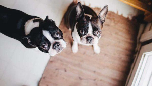 L'anxiété de séparation du chien : le bon entrainement