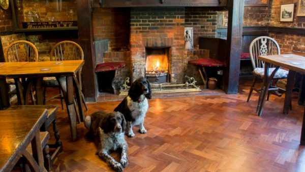 Top 8 Dog-Friendly Pubs in Hampshire