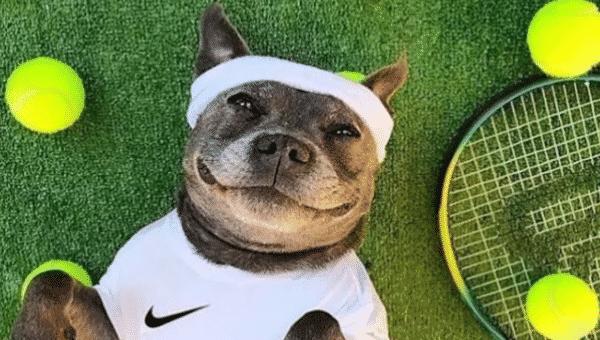 15 Dogs Who Love Tennis Balls More Than Wimbledon