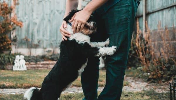 Lenguaje canino – 8 formas de decir «te quiero»