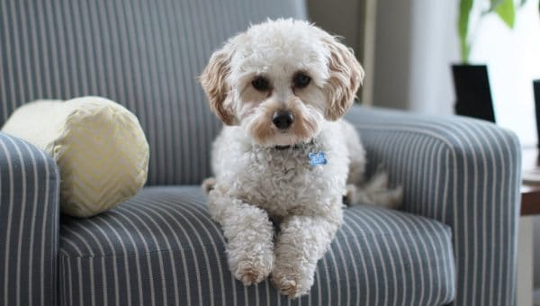 ¿Cómo eliminar el olor a orina de perro?