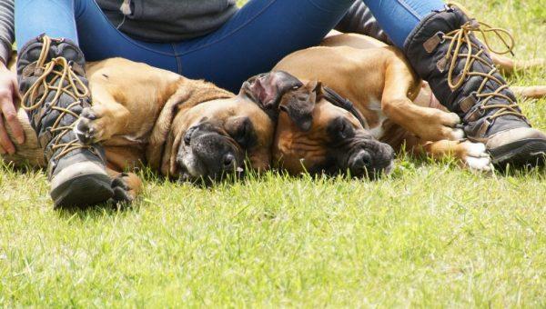 Las 10 razas de perros más cariñosos