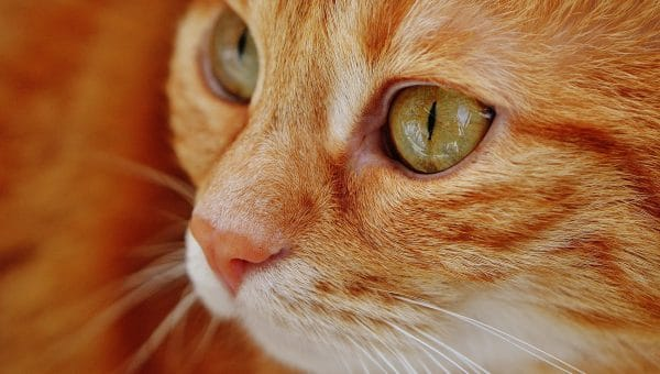 Cat DNA Tests: Is The Science Worth the Cost?