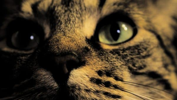 Are Cats Really Nocturnal?
