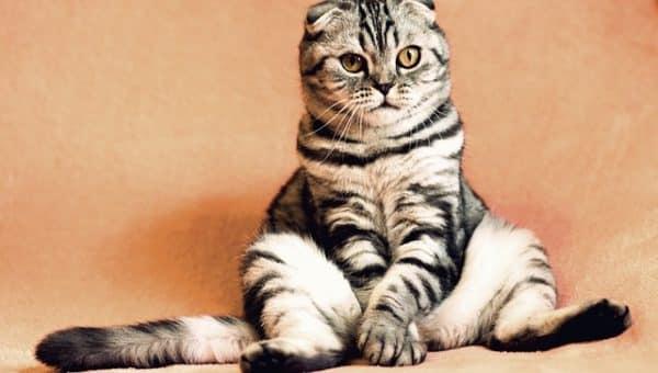 Comfy Cat- Pixabay