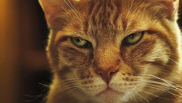 So…Why Are Cats Afraid of Cucumbers?