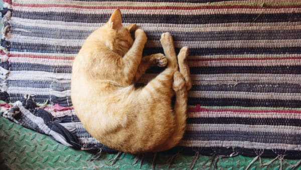 Why Do Cats Sleep So Much?