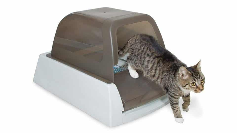 cat climbing out of automatic litter box