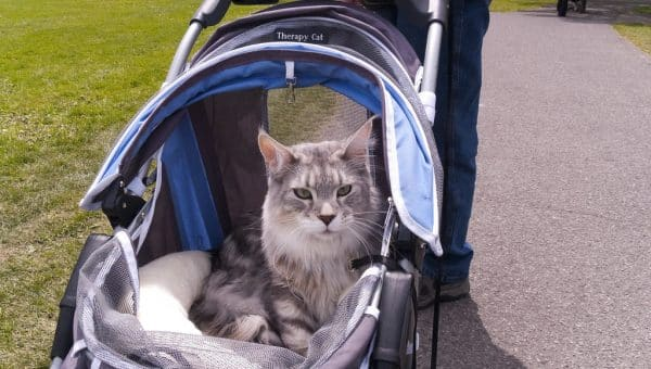 10 Best Cat Strollers for Taking Your Cat Everywhere