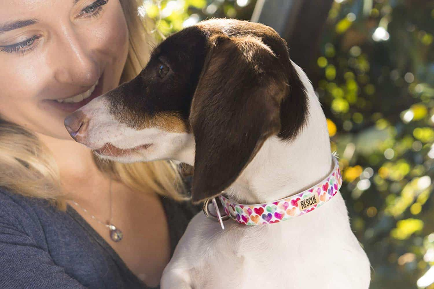 15 Cute Dog Collars For Every Kind Of Dog The Dog People By Rover Com