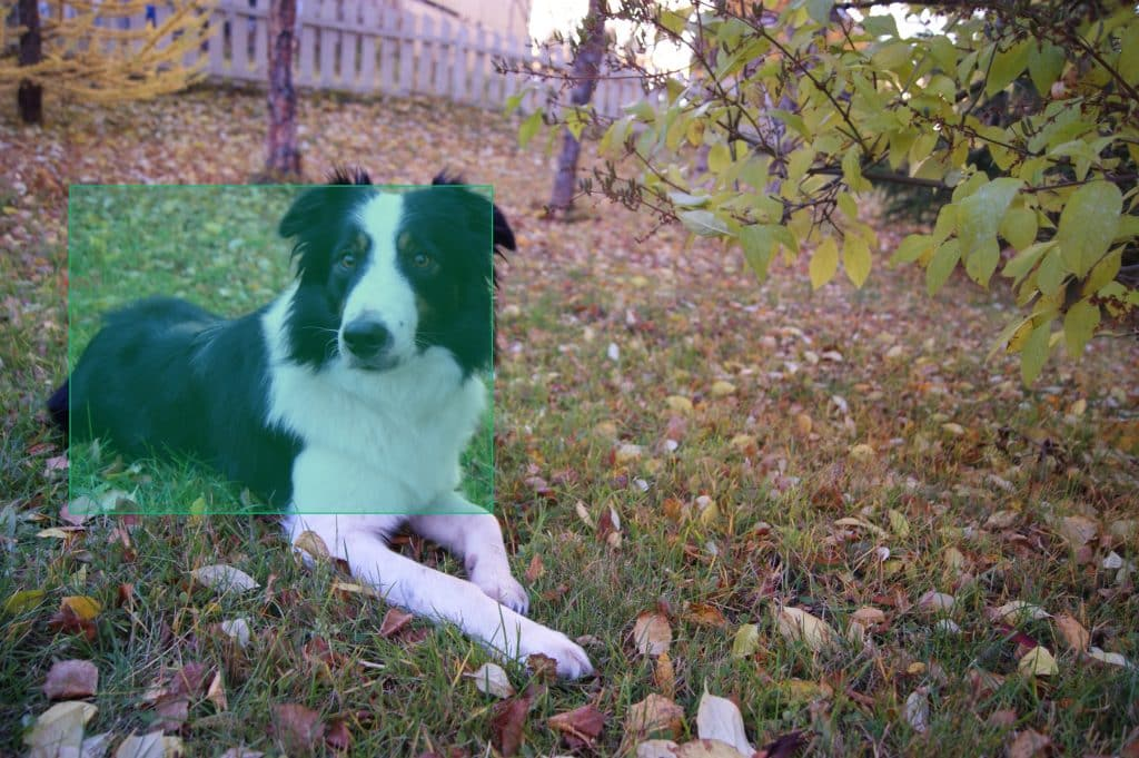 Dog lying down in a larger photo, with dog highlighted