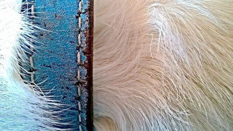 dog fur close up