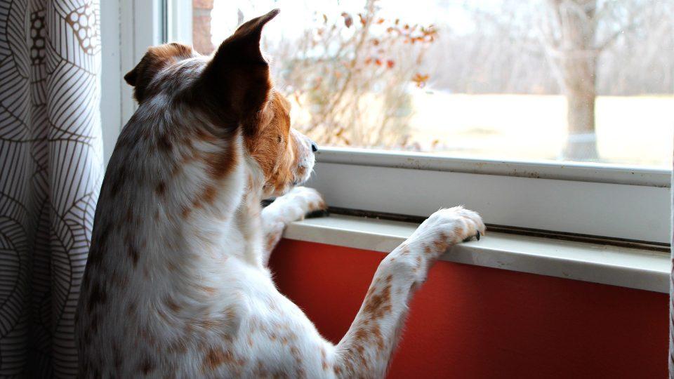 chien seul à la maison