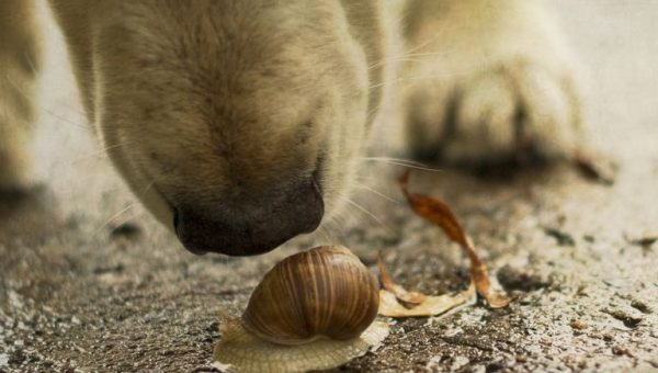 Dog Owners Warned as Lungworm Parasite Spreads Across the UK