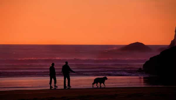 Can I Take My Dog to Hawaii?