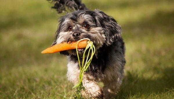 Las mejores 11 frutas y verduras para perros