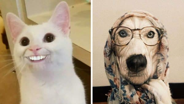 People are using FaceApp on Their Pets and the Results Are Outrageous