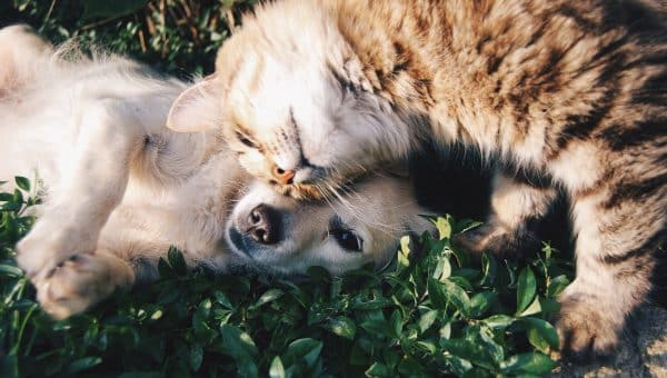 10 Dog Breeds That Get Along With Cats