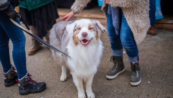 Guía sobre el comportamiento de los perros
