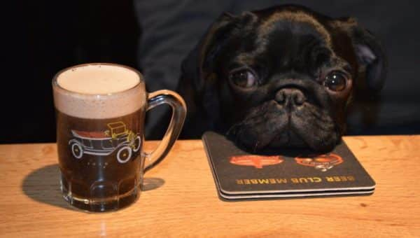 Top 7 Dog-Friendly Pubs in Buckinghamshire