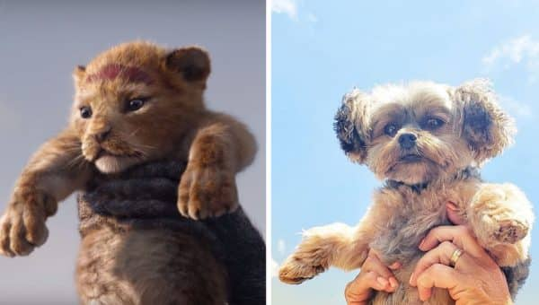 How Cute Are These 6 Dogs Being Held like Simba in Celebration of the New Lion King Movie?