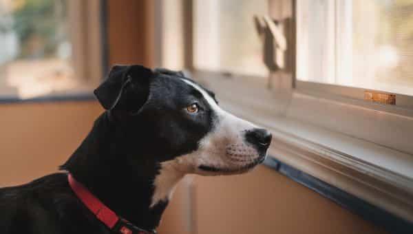 Dit is hoe je een hond met verlatingsangst moet trainen