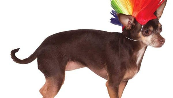 18 Ways to Dress Your Dog Like a Big Ol' Rainbow for Pride and Beyond