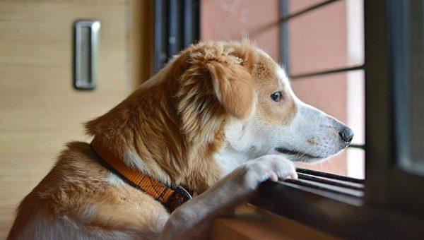 ¿Con cuánta frecuencia hay que pasear al perro?