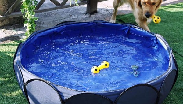 10 Best Dog Pools to Keep Your Pet Cool This Summer