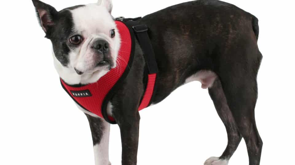 We Review The 15 Best Dog Harnesses For