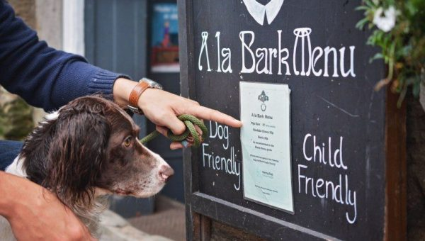 Top 9 Dog-Friendly Pubs in Devon