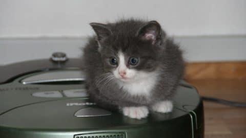 Kitten_Vacuum