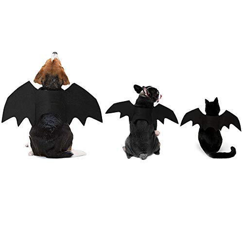 bat dogs and cat