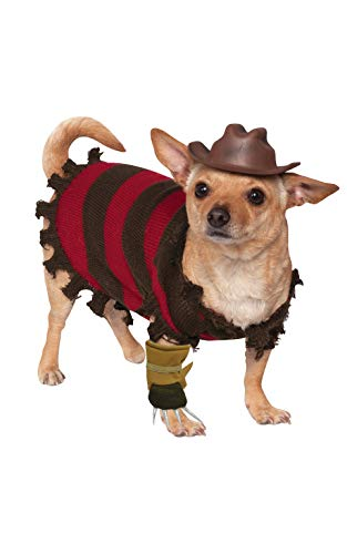 dog in Freddie Krueger costume