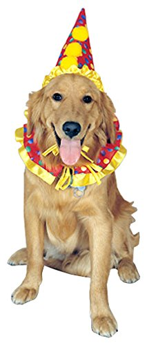 clown hat and collar on dog