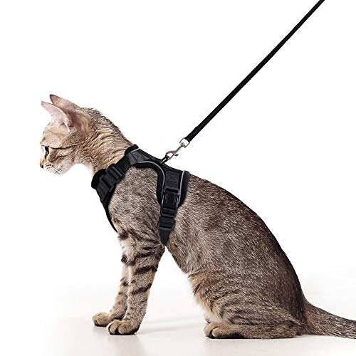cat in Rabbitgoo harness with leash