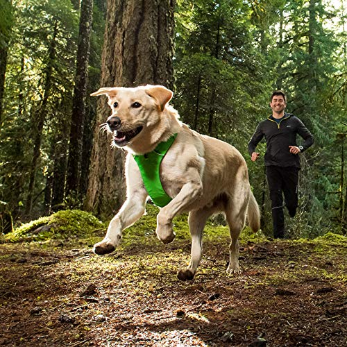 dog running in green Ruffwear harness