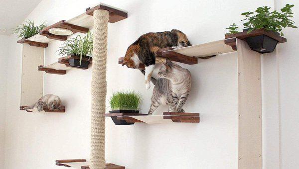 cats climbing wall-mounted cat tree