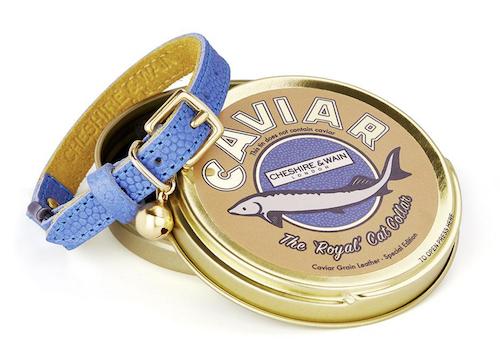 "Cheshire & Wain ""caviar"" leather cat collar with caviar tin"