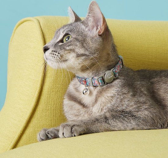 gray cat on yellow couch in rose-pattern collar