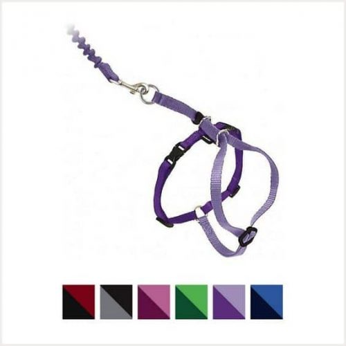 PetSafe harness with bungee leash