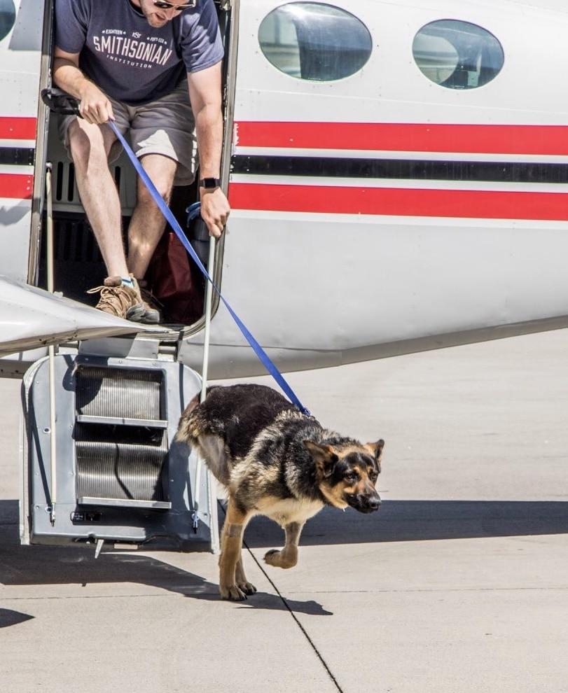 dog-off-plane.jpg