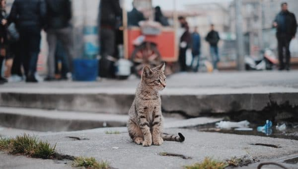 The Best Ways to Help Feral Cats