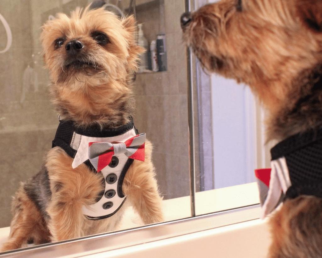 Dog_Costume_Tux